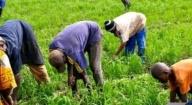 UNE AGRO-ÉCONOMISTE SALUE LA DIMENSION RÉGIONALE DE LA MISE EN ŒUVRE DU WAAPP