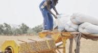 Dagana : Les producteurs réclament de bonnes semences
