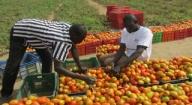 Amélioration de la productivité agricole : La ferme semencière de Sinthiou Malème bientôt fonctionnelle à plein temps