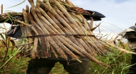 La malnutrition, un vieux souvenir à Bamba Thialène grâce à la transformation des céréales