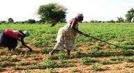 Programme de productivité agricole en Afrique de l'Ouest : La Banque mondiale réfléchit sur un nouvel agenda de projets
