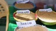 Reconstitution du capital semencier : Le Ppaao affecte des unités de triage et de conditionnement à six localités