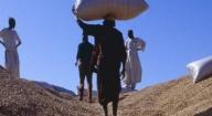 Sénégal : la Banque mondiale alloue 20 millions de dollars à l'arachide