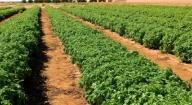 Production de semences horticoles : La ferme de Sangalkam opérationnelle dans trois mois