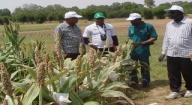 Lutte contre la pauvreté et le chômage : 50 millions de FCfa du Fnraa pour 9 groupements d'entrepreneuriat agricoles