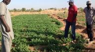 Massata Niang, Président du Comité de pilotage du PPAAO/WAAPP-Sénégal « Faire en sorte que chaque producteur puisse disposer de semences en qualité et en quantité »